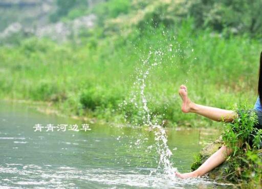 青青河边草 在线哪里观看